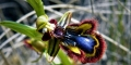 Fleurs-des-Pyrenees_024-619x348
